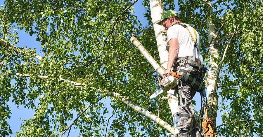 Milpitas, CA Tree Services